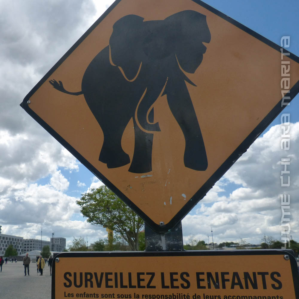 Attention éléphants